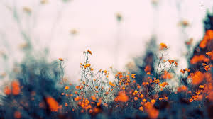 Aesthetic Floral HD Wallpapers ...