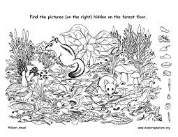 New games added every week. Find The Hidden Things On The Forest Floor And Then Color Hidden Pictures Hidden Picture Puzzles Hidden Pictures Printables