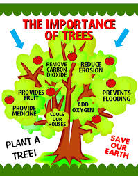 Make A Importance Of Trees Poster Arbor Day Poster Ideas Places
