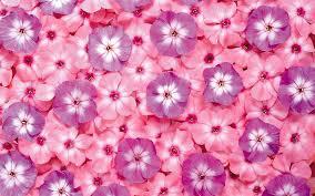 Pink flowers desktop #6987173