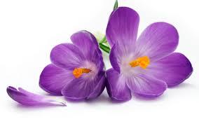 """Результат пошуку зображень за запитом """"цветок"""""""