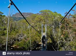 rope bridge crossing narcissus river on overland track in cradle  rope bridge crossing narcissus river on overland track in cradle mountain lake st clair nationalpark tasmania