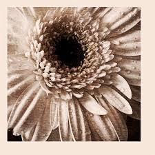 Mezzotint Photograph by Bonnie Samuel