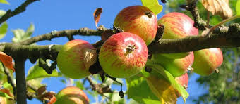43 Best Pruning Fruit Trees Images On Pinterest  Fruit Trees Dormant Fruit Trees
