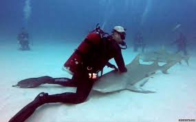 footage captures moment shark ask diver for back rub eli martinez can be seen carefully caressing the shark s back