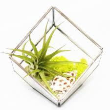 Air Plant Terrarium Glass Cube Air Plant Terrarium Kit By Dingading Terrariums