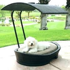 dog shade canopy – sabesparaquesirve.com