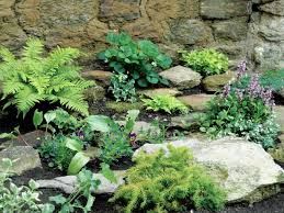Make a Shady Rock Garden