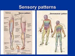 Dermatomal Pattern Fascinating Lower Limb Entrapment Syndromes Ppt Video Online Download