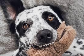 Je nach herkunft, verwendung und aussehen sind hunde in 10 hunderassen gruppen laut fci unterteilt. Das Sind Die 20 Sussesten Hunderassen Sagt Die Wissenschaft