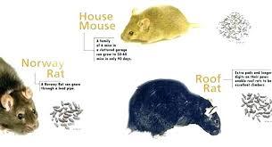 rat poison pellets home depot. Bait Rat Poison Pellets Home Depot O