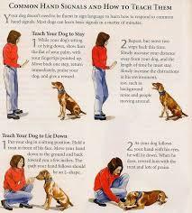 Dog Training Chart Dog Training Hand Signals Chart Www Bedowntowndaytona Com