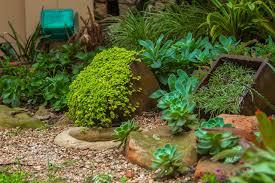 creating a succulent rock garden 10 jpg
