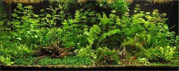 Seachem Planted Aquarium Dosing Chart Planted Aquarium Fertilizer How To Articles