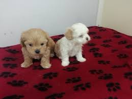 cute puppies for sale 2014. Exellent Sale 20160304_142331 20141130 094910  In Cute Puppies For Sale 2014