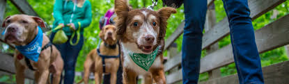 Effective Policies | National Canine Research Council