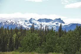 Природа растения и животные Северной Америки Растительный мир Северной Америки