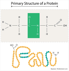 polysaccharides proteins and nucleic acids