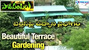 Terrace Kitchen Garden Beautiful Wonderful Terrace Gardening By Rama Raju In Hyderabad