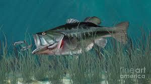 largemouth bass underwater. Simple Largemouth Fish Digital Art  Largemouth Bass By Walter Colvin Inside Underwater 3