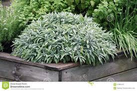 plantsr raised garden beds herbs plant planting you building vegetables