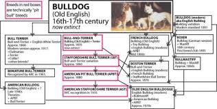 Dog Breed History Chart Shan I Blog Graph Chart Map And Citation