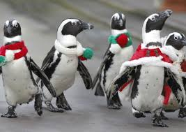 Image result for jackass penguin