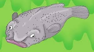 Zoosparkle - Schifanimali #9 - il pesce blob - YouTube