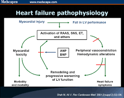 Pathophysiology Of Chf Heart Failure Pathophysiology Hfp04 Heart Failure Pinterest