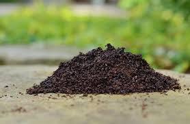 using coffee grounds in your garden redeem your ground redeem your ground
