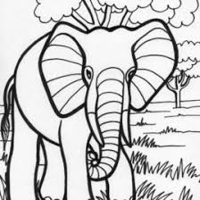Small Picture Free Printable Elephant Coloring Pages For Kids Elephant Color