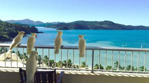 Southerly 15 knots developing in the afternoon. Climate Hamilton Island Water Temperature Best Time To Visit Weather