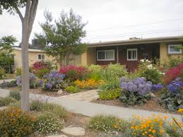 drought tolerant garden. Long Beach Landscape Designer - Colorful Drought Tolerant Garden
