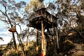 Giraffe Outside Treehouse The Canberra Australia Zoo Hotel Treehouse Accommodation Nsw