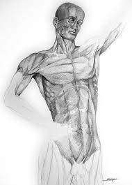 Muscoli In Tensione Disegno A Matita Su Carta Maulicante