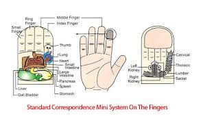 Sujok Therapy Points Chart Freeware Mini System Index Finger Acupressure Therapy Acupressure