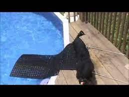 diy dog ramp for swimming pool you