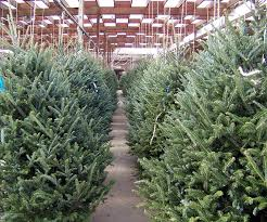 How To Buy A Christmas Tree  WayfairWhen Should You Buy A Christmas Tree