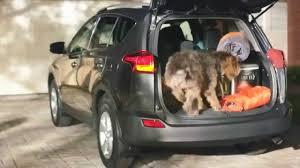 All New Toyota RAV4 Top Dog - YouTube