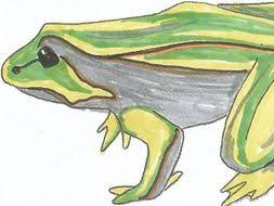 Parts Of A Frog Montessori Nomenclature Cards Parts Of A Frog By Lcallard21