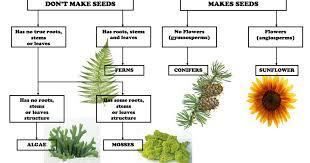 Plant Classification Chart Pdf Plant Classification