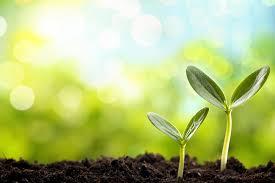Marvelous LEDs Können Für Besseres Wachstum Bei Pflanzen Sorgen