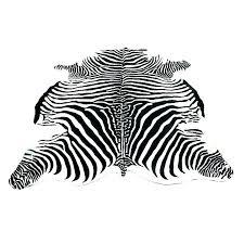 authentic zebra hide rug zebra hide rug fancy zebra skin rug cow skin rugs discover the authentic zebra hide rug
