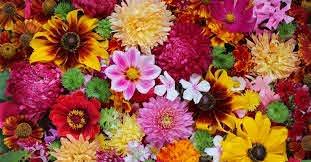 where do flowers get their colours
