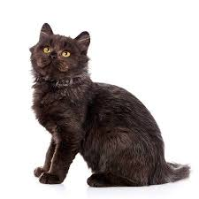 cute black cats with yellow eyes. Modren Cute Cat Pet And Cute Concept  Black Cat With Yellow Eyes On A White And Cute Black Cats With Yellow Eyes T