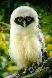 <b>Cute owl</b> | Animals | <b>Birds</b>, <b>Beautiful birds</b>, <b>Owl</b>