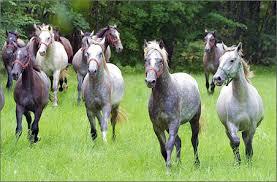 Znalezione obrazy dla zapytania hodowca koni