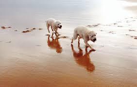testimonials doggydaycare