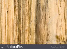 wood grain texture. A Close Up Of Wood Grain Texture Pattern On Split Pine Timber.
