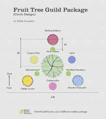 TreeRipened Medley Fruit Tree